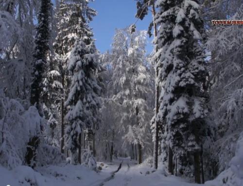 Stadel Winter 2014